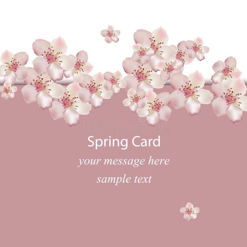 Cherry flowers blossom spring card Vector illustration. Delicate decor for anniversary, wedding, birthday, events. stock illustration