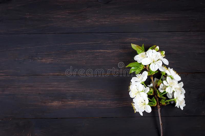cherry flowers on dark wooden background stock photography