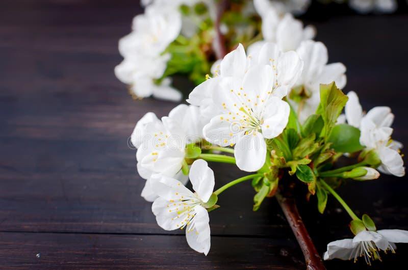 cherry flowers on dark wooden background royalty free stock photo