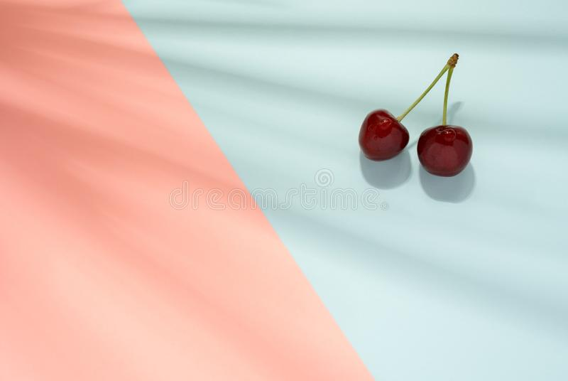 Cherry fruit on light blue and pink background with palm leaves shadow - Summer concept. Cherry fruit on light blue and pink background with palm leaves shadow royalty free stock image