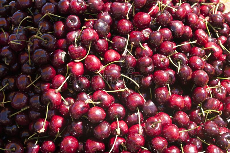 Red Cherries in a bin. Cherry is the fruit of many plants of the genus Prunus, and is a fleshy drupe stone fruit. The cherry fruits of commerce usually are stock image
