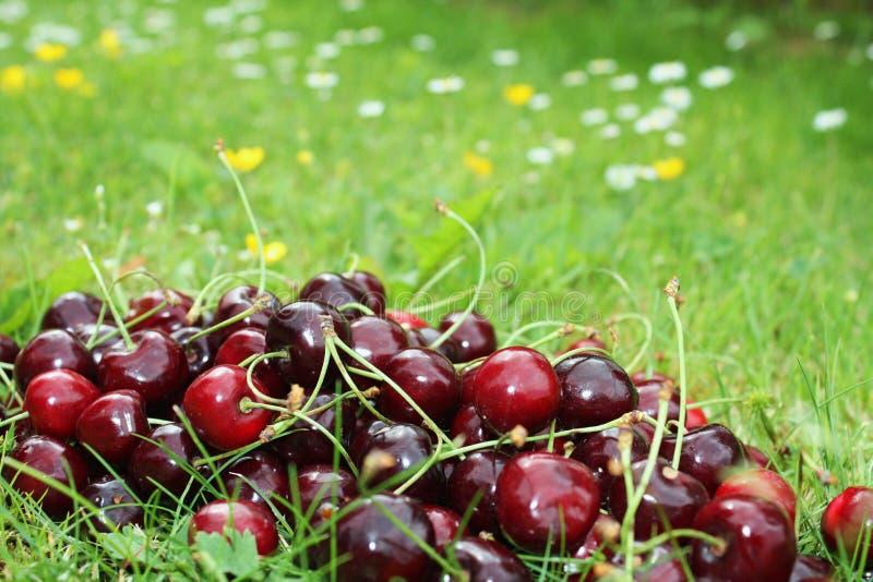 Cherry On Grass Stock Photo