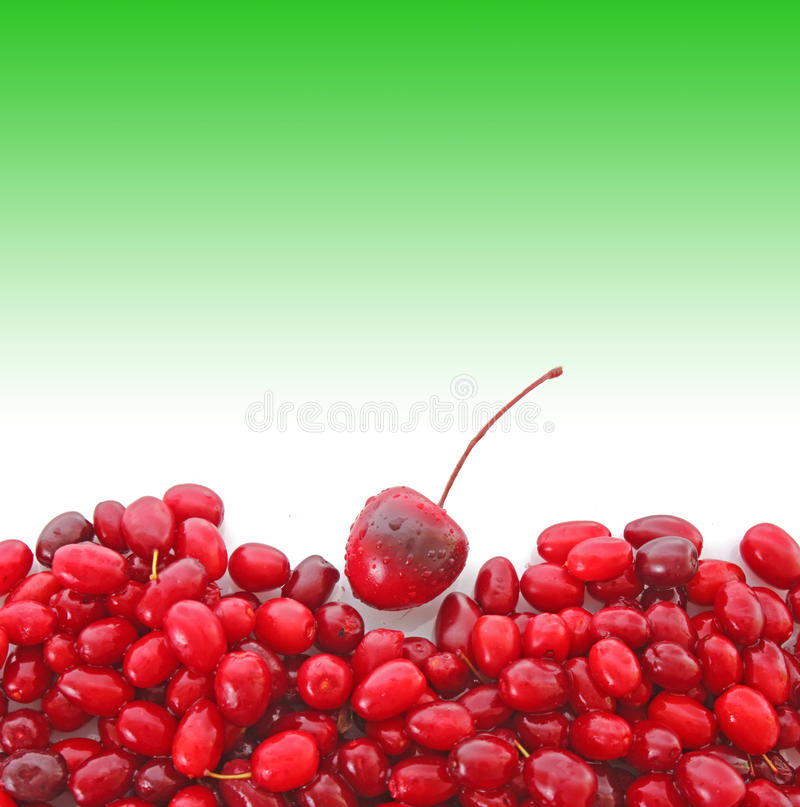 Cherry on green stock photography
