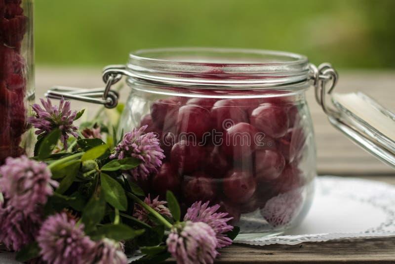 Cherry Harvest lizenzfreie stockfotos