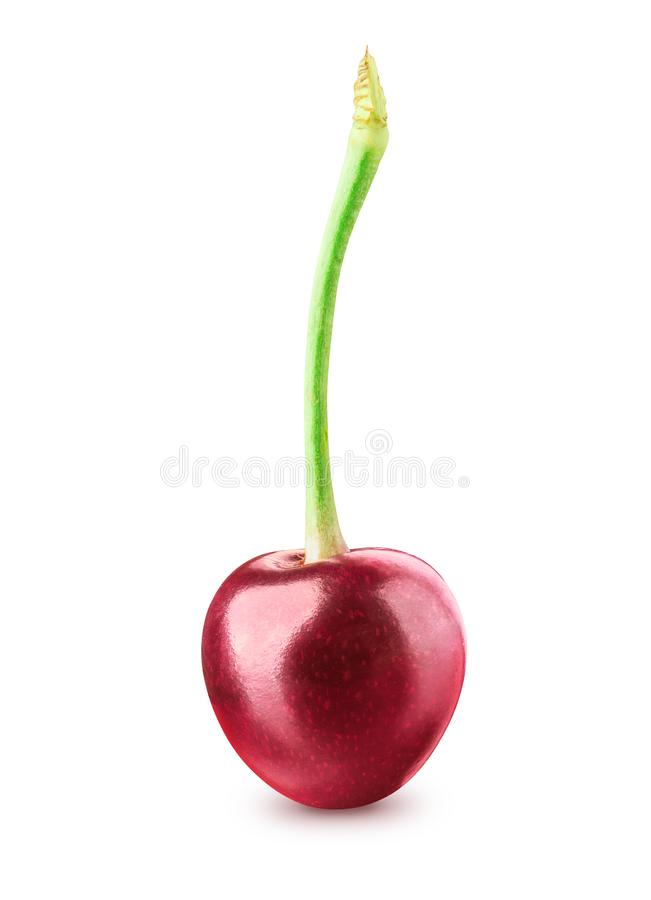 Cherry isolated on white royalty free stock photos