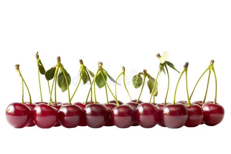 Cherry isolerad banarad royaltyfria foton