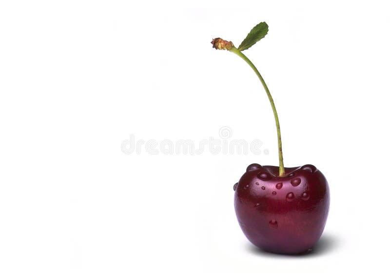 cherry kropli wody zdjęcie stock