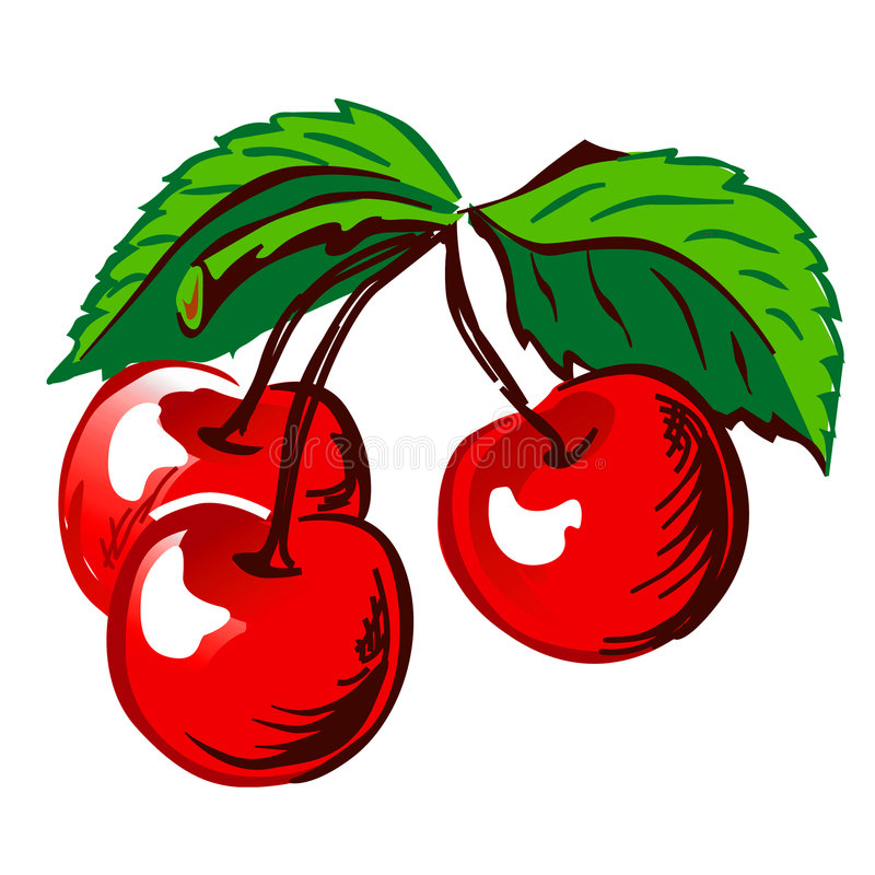Cherry with Leafs stock illustration