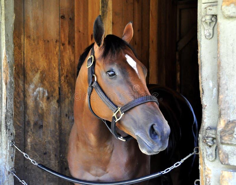 Cherry Lodge - Pferdehafen Saratoga stockfotos