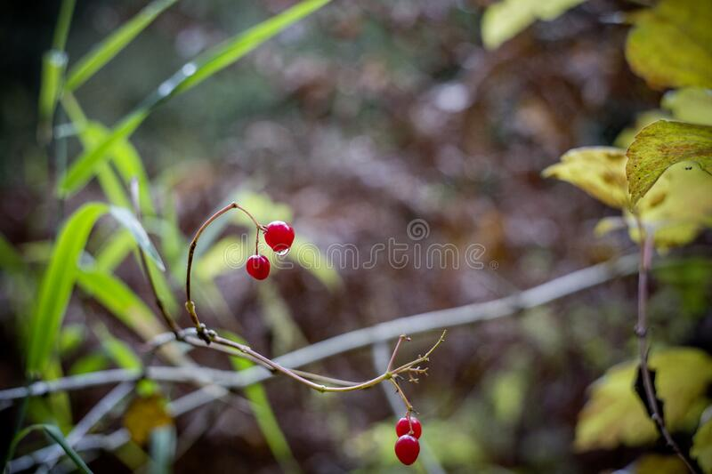 Cherry With No Leaves And Branch Free Public Domain Cc0 Image