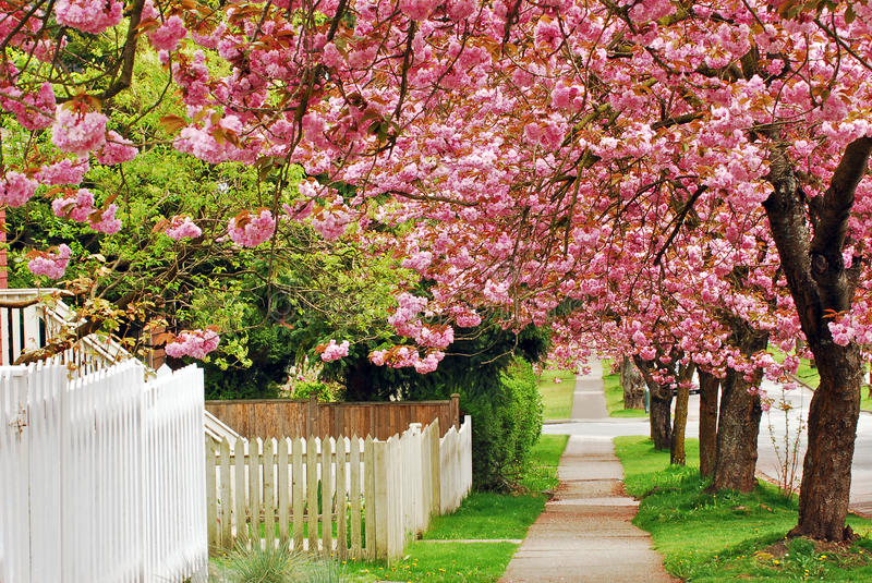 Cherry Path stock images