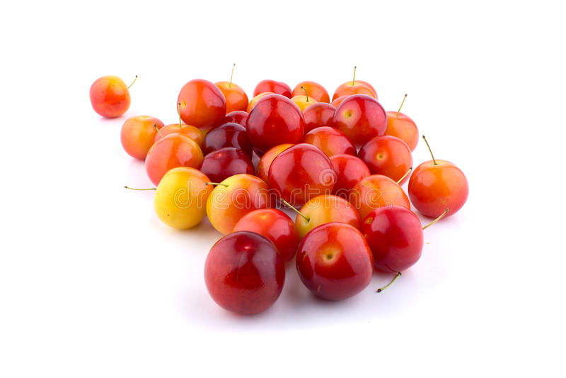 Cherry-plum stock photography
