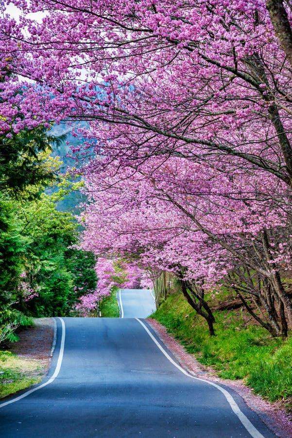 Cherry Road bonito na exploração agrícola Taiwan de Wuling imagens de stock royalty free