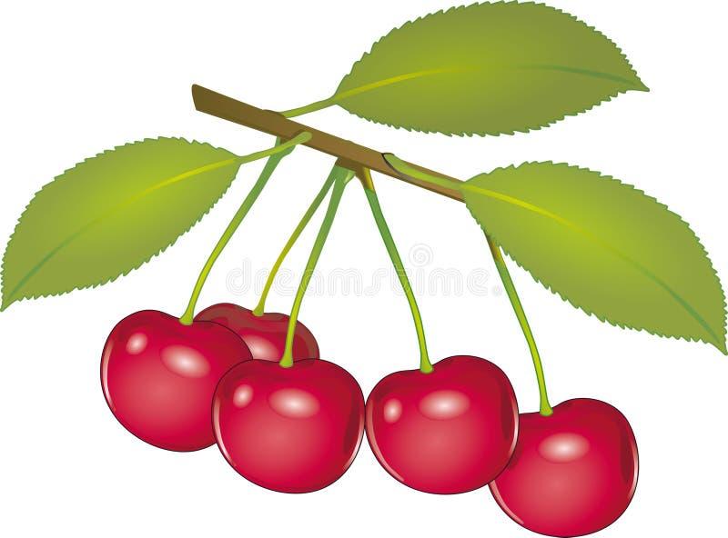 Cherry`s