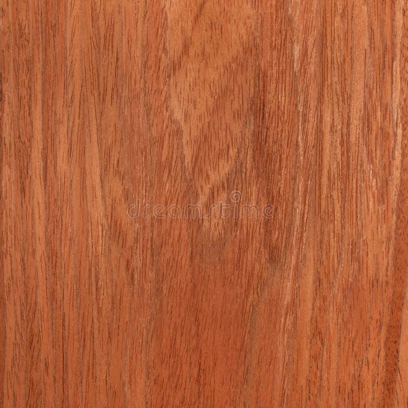 Cherry texture wood. Tree background royalty free stock photo