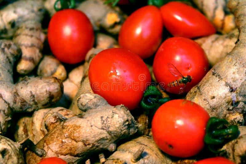Cherry Tomato-Hintergrund mit Gelbwurz lizenzfreies stockfoto