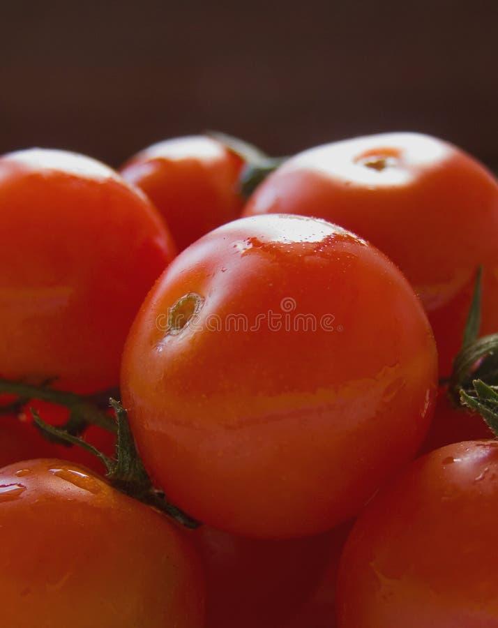 Download Cherry tomatoes stock photo. Image of close, dark, drips - 11386092