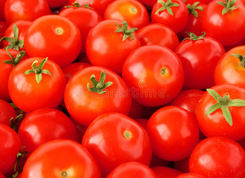 Download Cherry tomatoes stock photo. Image of tomato, produce - 19015078