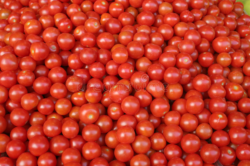 Cherry Tomatoes. A lot of small, red, shiny cherry tomatoes royalty free stock image