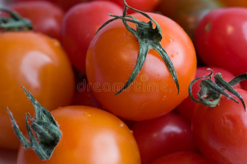 Download Cherry tomatoes stock photo. Image of fresh, salad, vine - 4215676