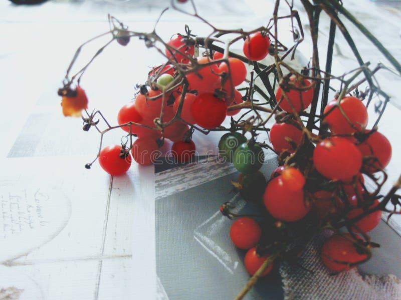 Cherry Tomatoes lizenzfreies stockbild