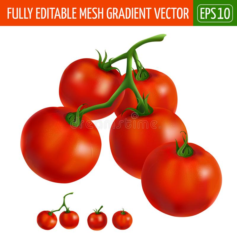 Cherry tomatoes on white background. Vector illustration royalty free illustration