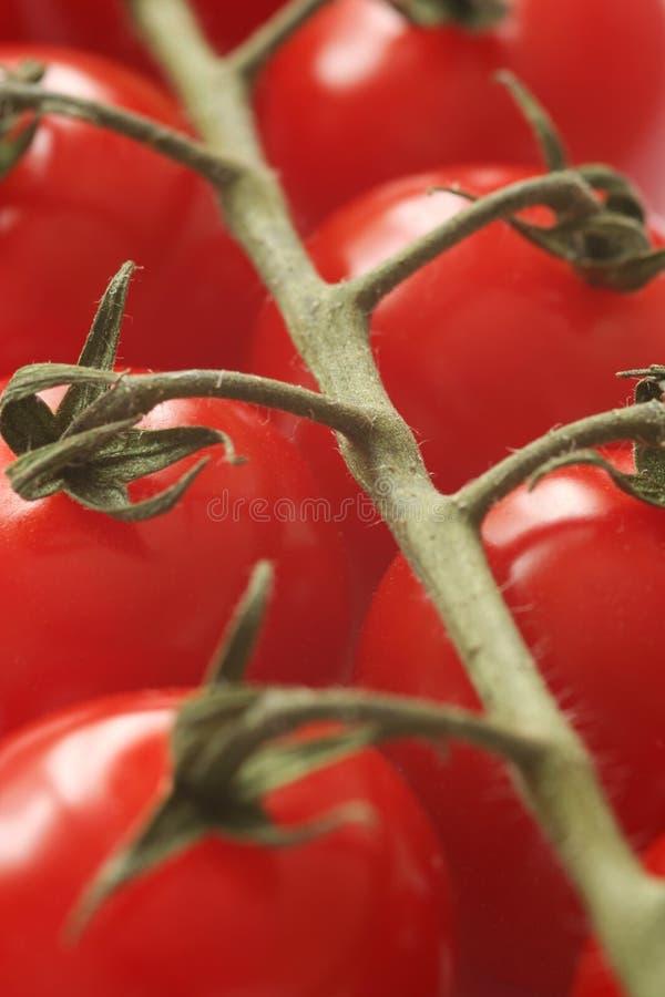 Cherry Tomatoes Macro stock image