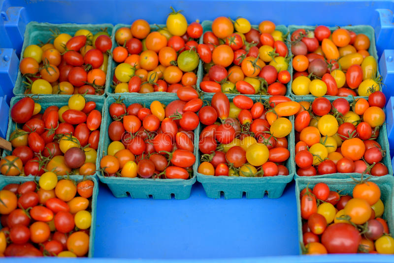 Cherry tomatoes. royalty free stock image
