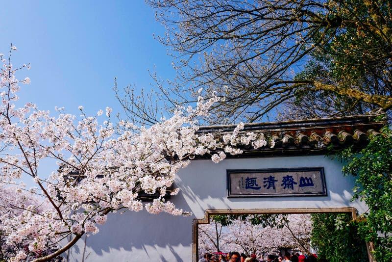 Cherry Blossom valley,wuxi,china stock photos