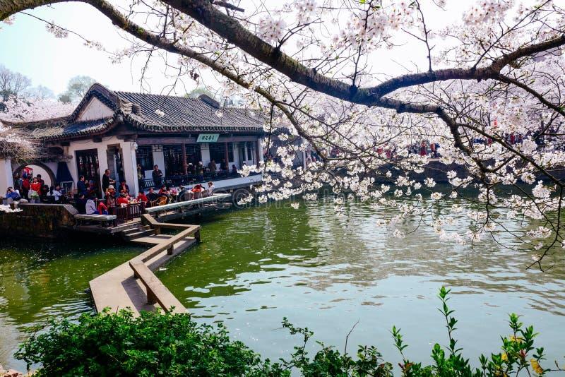 Cherry Blossom valley,wuxi,china royalty free stock image