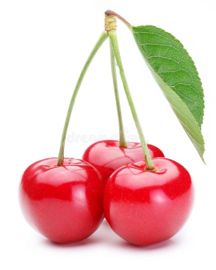 Cherry tre arkivbilder