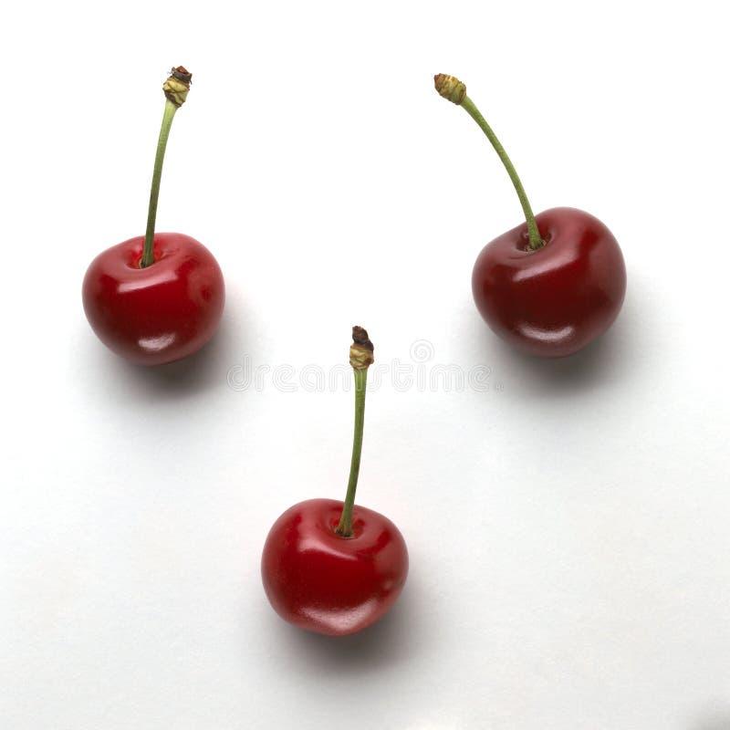 Cherry tre royaltyfria bilder