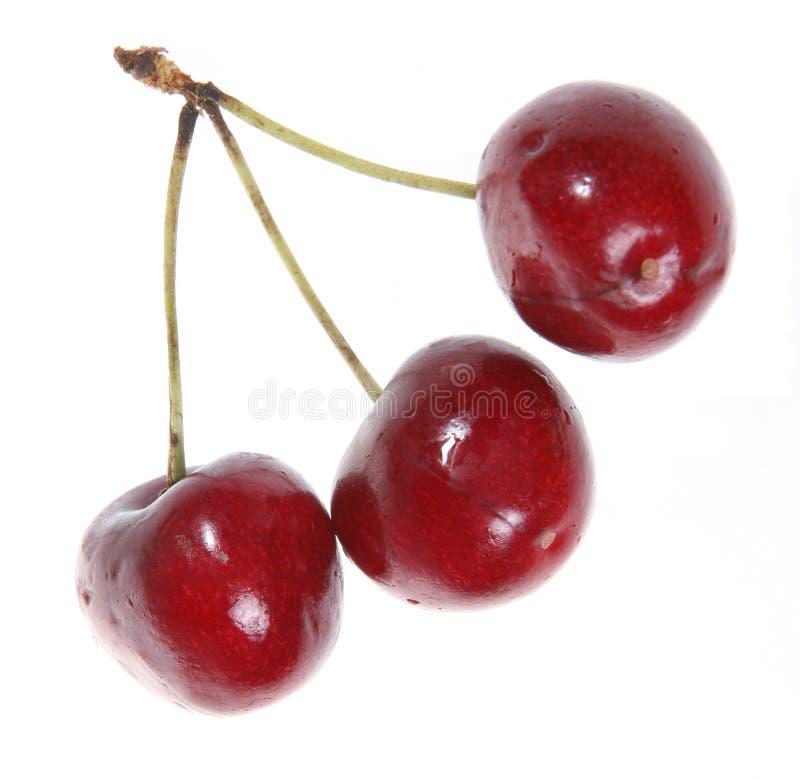 Cherry tre arkivfoton