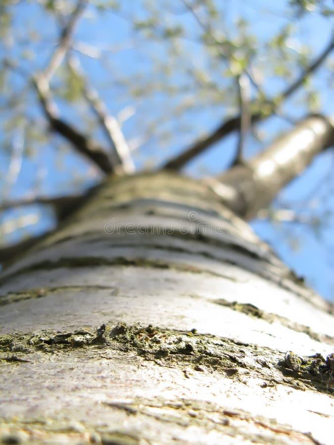 Download Cherry-tree stock image. Image of outdoor, cherry, bark - 27272613