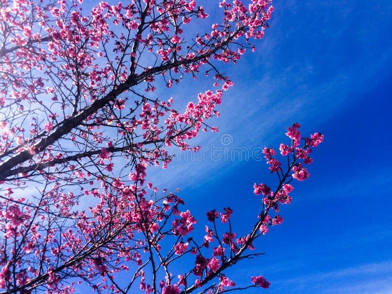 Cherry Tree fotografia de stock