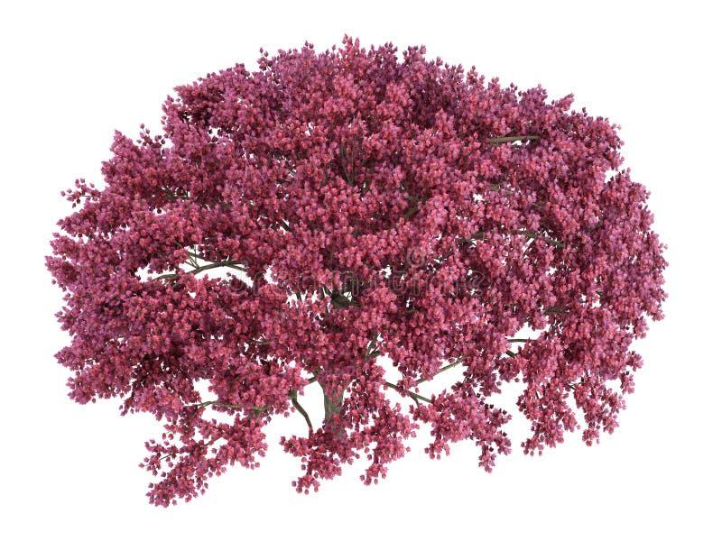 Cherry_tree stock de ilustración