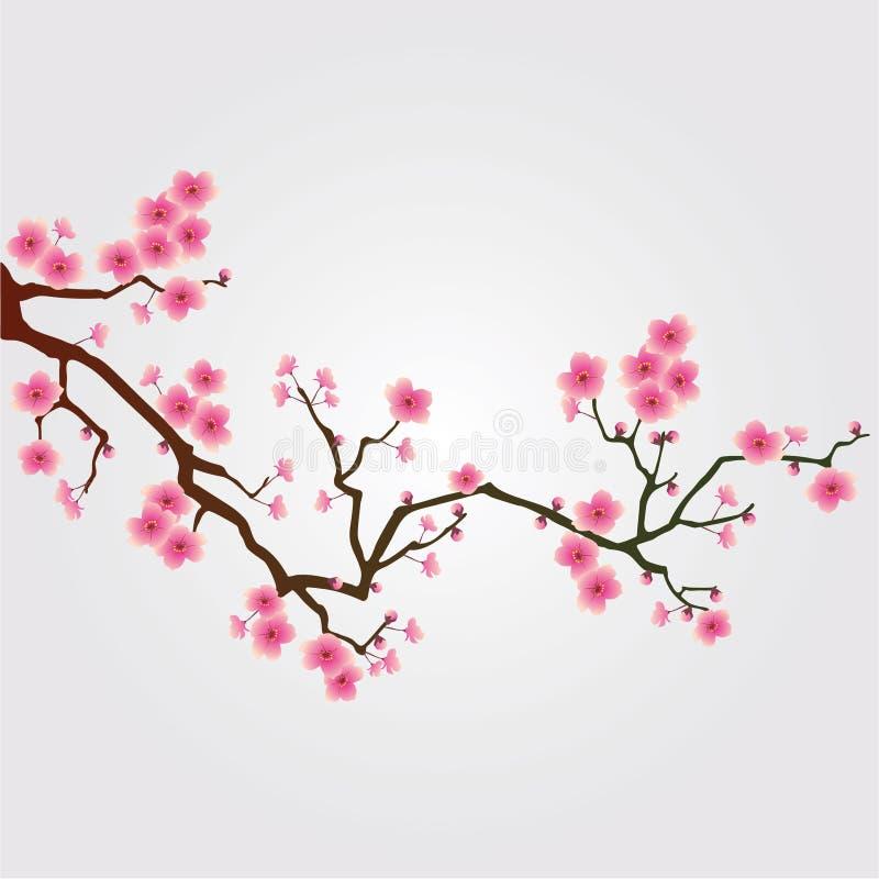 Cherry tree blossom royalty free illustration