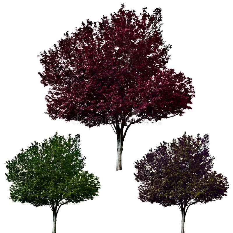 Cherry Tree Set. An image of a set of cherry trees stock photo