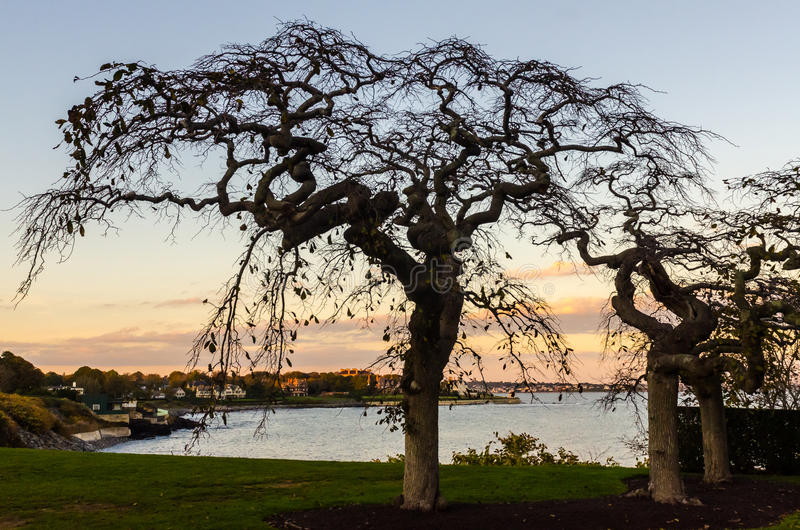 Bare Cherry Tree Sunset Silhouette - Newport, RI stock photos