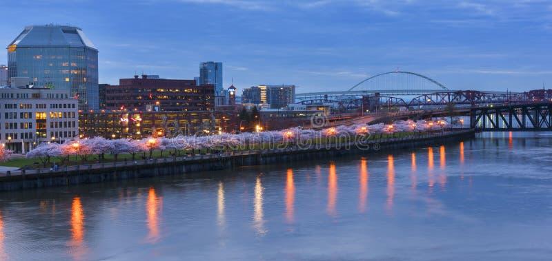 Cherry Trees à la rivière de Wallamette à Portland image libre de droits