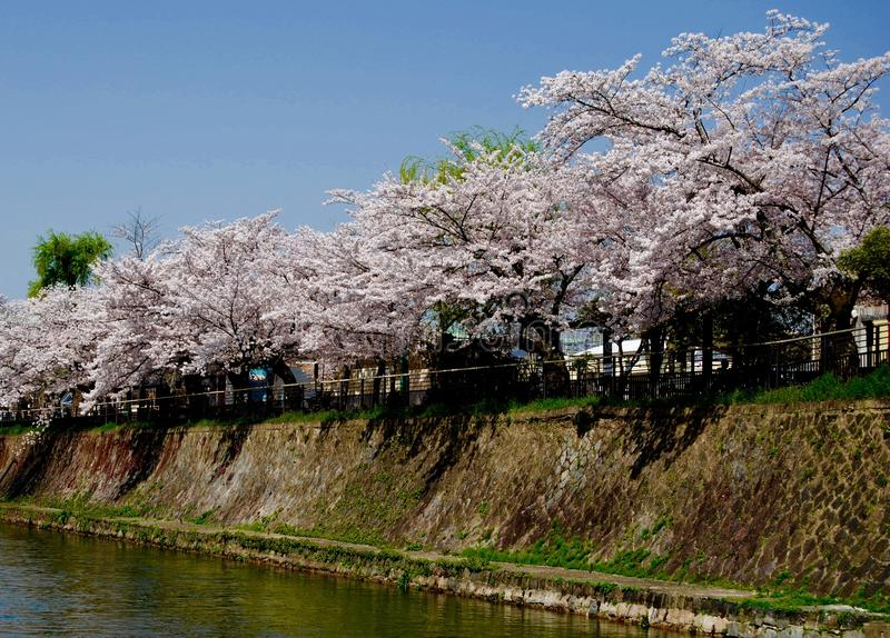 Cherry Trees Along A Canal stock photography