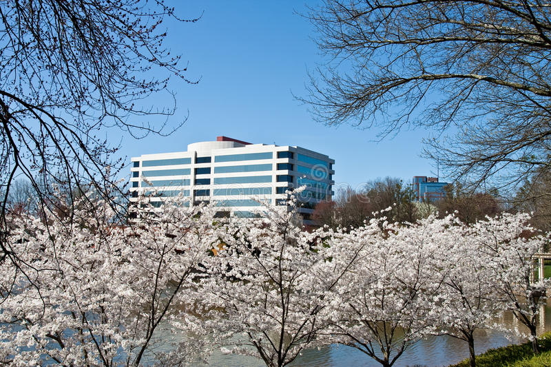 Download Cherry Trees Blooming On Shore Of Lake Stock Image - Image: 14684355