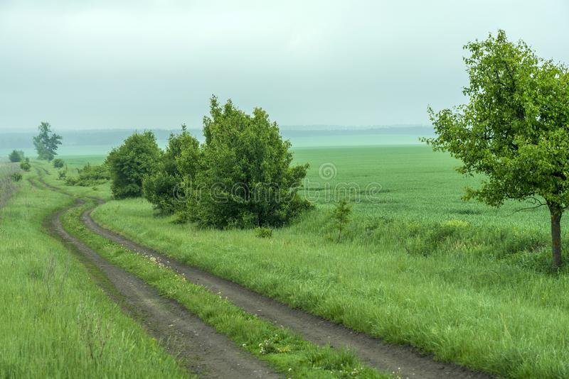 Trees with young foliage along a dirt road. Spring landscape in the morning haze royalty free stock images