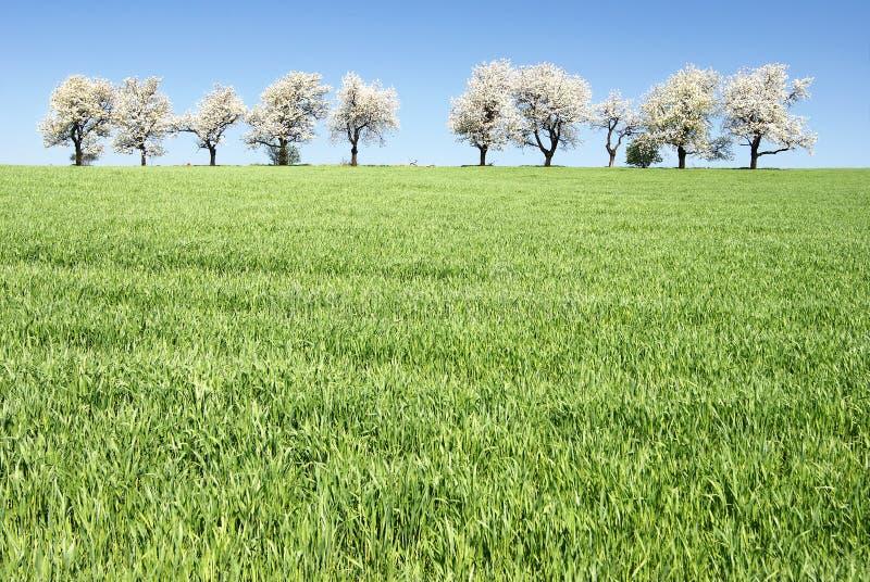 Cherry-trees e campos fotografia de stock royalty free