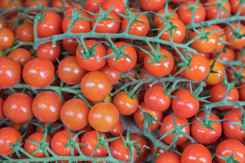 Cherry vine tomatoes. Colorful Red Cherry vine tomatoes royalty free stock image