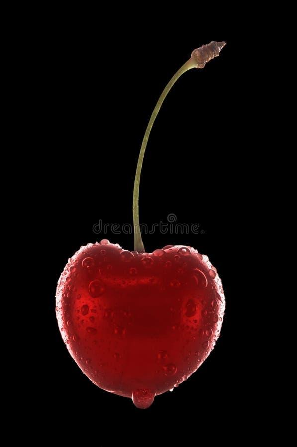 cherry występować samodzielnie obraz stock