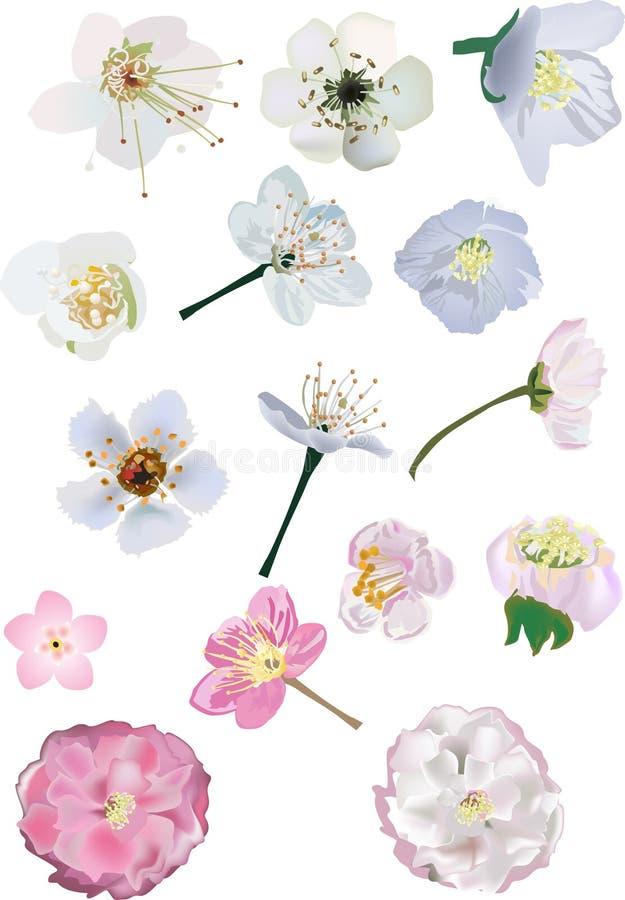 Cherrysamlingen blommar jasmintreen royaltyfri illustrationer