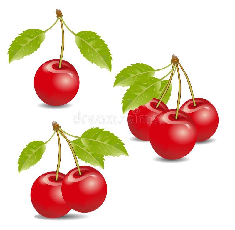 cherrysfress royaltyfri illustrationer