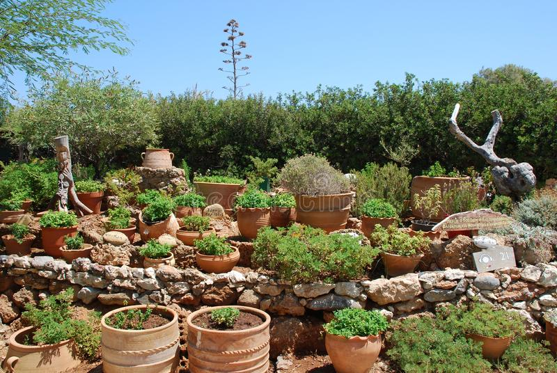 Chersonissos, Cyprus, Greece - 31.07.2013: Garden of plants and flowers growing in clay pots royalty free stock image