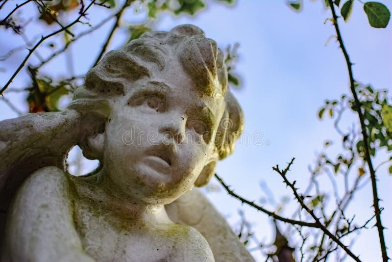 Cherub angel face stock photography